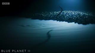 وارد شدن شک به مارماهی به دلیل شنا در آب مسموم