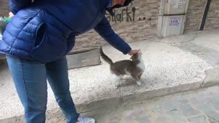 گربه خیابانی فوق العاده مهربان