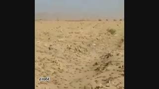 حمله ملخ ها به خوزستان
