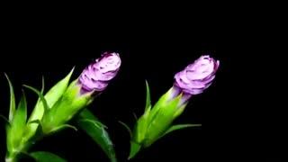 گل من چندی منشین غمگین.....