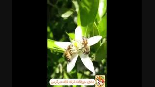 2- زنبور