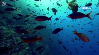 مستند حیات وحش اقیانوس بزرگ با دوبله فارسی