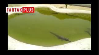 مزرعه تکثیر و پرورش تمساح در چابهار