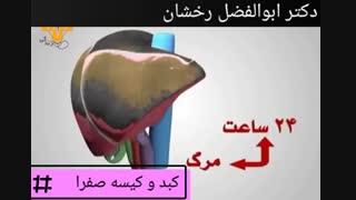 نقش کبد و کیسه صفرا در بدن