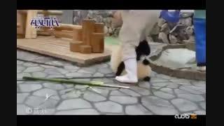 شیطنت های یک پاندا در باغ وحش