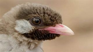 سکانسی از سیاره انسان پیدا کردن کندوی عسل توسط یک پرنده وحشی