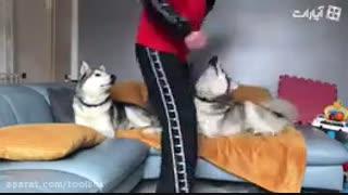 وقتی سگ ها هم قهر میکنند
