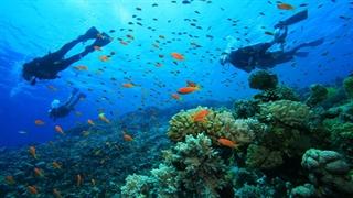 بهار زیر آب های خلیج فارس