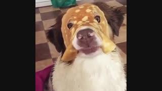 """تایتل هایی که خبرگزاری ها رو ویدئوها میذارن،: """"ابتذال عجیب سگ غربی جنجالی که باعث حیرت تمام دنیا شد"""""""