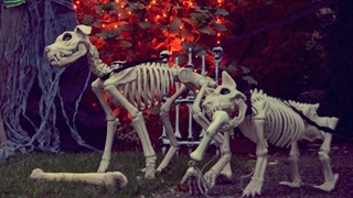 8 حیوانی که بعد از مرگ هم میتوانند زندگی کنند!