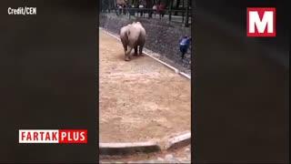 حادثه وحشتناکی که در باغ وحش ختم به خیر شد!