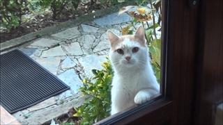 کلیپ گربهای که با زل زدن منظورش رو میرسونه