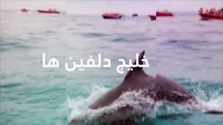 قشم گردی (2019) : همه چیز در مورد سفر به جزیره عجایب هفتگانه قشم