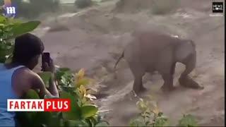 فیل آزاری چند جوان خام فاجعه آفرید!