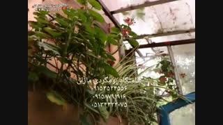 اقامتگاه بوم گردی ماژان در مشهد