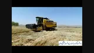 برداشت گندم از مزارع گچساران