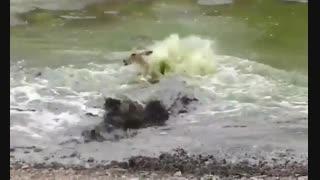 شکار غافلگیرانه بچه آهو