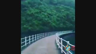 طبیعت گردی با تورجور