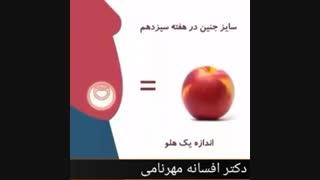 رشد جنین در شکم مادر