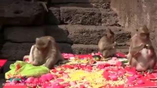 جشن میمون ها در تایلند  | کی سفر