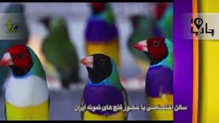 نمایشگاه گرانترین قناری های ایران ۹۸