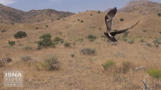 رهاسازی چند گونه جانوری در پارک ملی «خجیر»