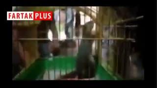 فروش قاچاقی سنجاب مقابل مترو تجریش