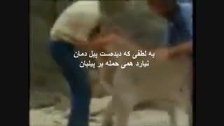 عشق ومحبت مرز نمی شناسد-ملاقات یک شیر وحشی پس از یک سال بامربیانش-زیرنویس همزمان فارسی انگلیسی