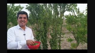 دکتر علی شاه حسینی - تلاش - پشتکار