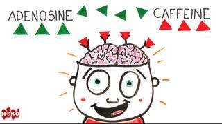 آیا می دانید که قهوه چگونه بر بدن ما تاثیر می گذارد؟