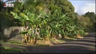 چرا در کوچهها و پارکها درخت میوه نمیکاریم؟