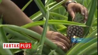 کارآفرینی و راه اندازی شغلی پایدار با یک گیاه دور ریختنی