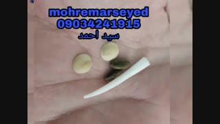 مهره مار سید احمد