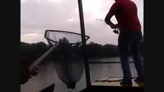 ماهیگیری کپور با قلاب