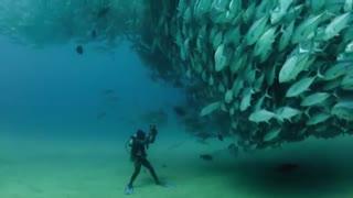 تورنادویی از ماهی تن