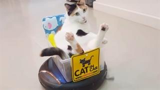 ویدیو طنز از حیوانات 2