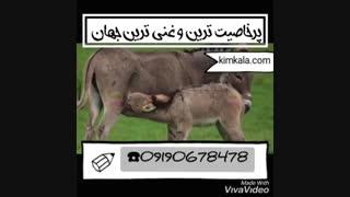 شیرالاغ 09190678478 خواص درمانی شیرالاغ بهترین شیرالاغ دنیا
