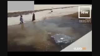 زندهگیری یک تمساح ۳/۵ متری در سیستان و بلوچستان