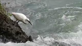 زیباترین فیلم لک لک ماهیگیر در حیات وحش زیبا