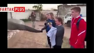 ضربه محکم فیل به گردشگری که از آن فیلم میگرفت!