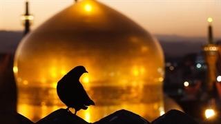 «هفدهمین جشنواره بینالمللی امام رضا(ع)»
