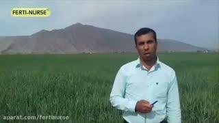 مصاحبه با کشاورز یراحی در رابطه با استفاده از محصولات فرتی نرس