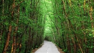 جنگلهای تالش، استراتژیکترین جنگل جهان