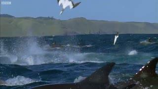 شکار و تغذیه هزاران موجودات آبزی و پرنده کنار یکدیگر