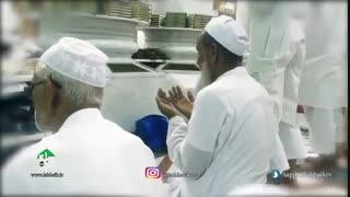 نماهنگ نبی المصطفی(ص) به صدای حامد زمانی