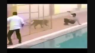 عاقبت نزدیک شده به حیوانات وحشی