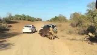 حمله حیوانات وحشی به انسان
