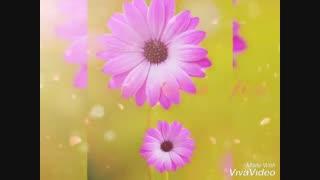 ویدیولایت آرامش بخش...با تصاویر زیبای هنرمند عزیز و ارجمندمون بانو فرناز مالکی..( ستین... #SATIN )