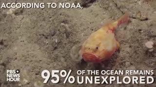 شگفتیهای کف دریا-موجودات عجیبی که در بستر دریا،یا اقیانوس زندگی میکنند 1