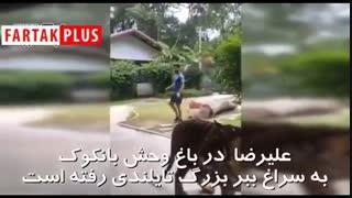فوتسالیست ایرانی در قفس ببر!